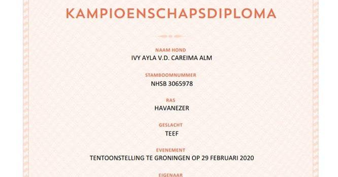 Ayla onze mooiste Havanezer;  Nederlands kampioen!
